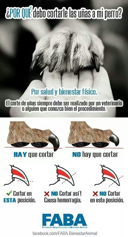 Corte de uñas para perros
