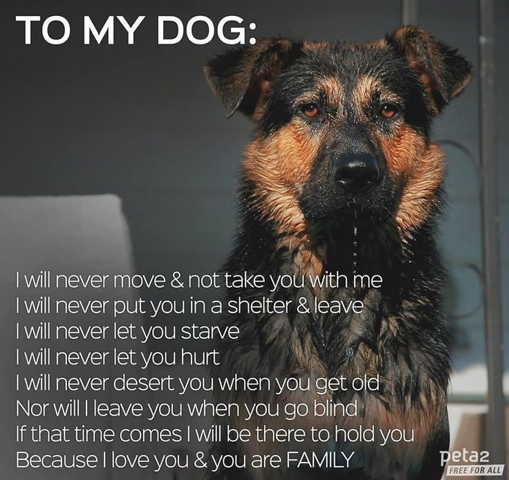 To all my dogs that may walk into my heart throughout the rest of my life....