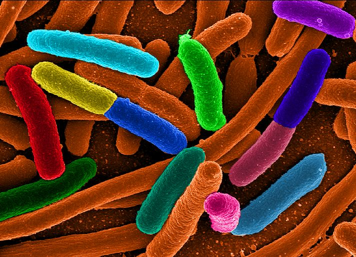 Making better biofuel-producing bacteria - Scientists have long been trying to bioengineer bacteria to produce fuel that can be used instead of traditional fossil fuels. But one problem they have faced is that the fuel is toxic to the bacteria...Click through to read more.