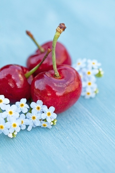 Two seasons in one photo | Cherries & Forget-me-nots