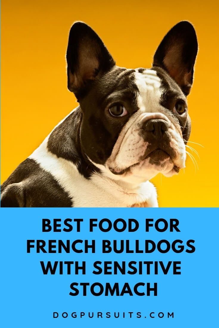 Best Food For French Bulldogs With Sensitive Stomach Sensitive