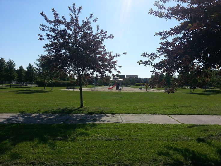 From Johnny, Grade 3 - Johnny loves our park around the corner.  Rosetta Park has beautiful trees and bushes and paths.