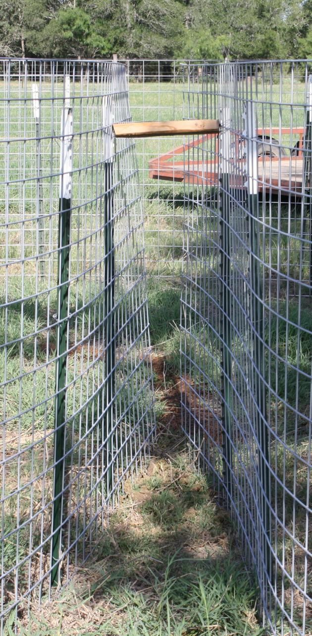 The 34 best traps images on Pinterest | Hog trap, Hog hunting and ...