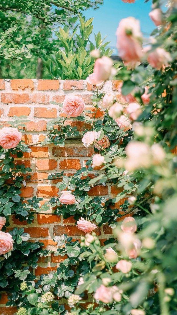 Flower Garden Wallpaper Iphone Flowergarden Flowerphotography