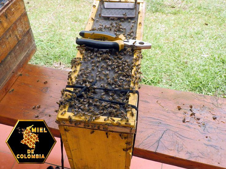 Las abejas son mucho más importantes de lo que pensamos. La producción de alimentos a nivel mundial y la biodiversidad terrestre dependen en gran medida de la polinización, un proceso natural que permite que se fecunden las plantas y den así frutos y semillas. Las abejas, y otros insectos como mariposas y abejorros, son los responsables de este proceso y, sin embargo, sus poblaciones están disminuyendo a pasos de gigante.