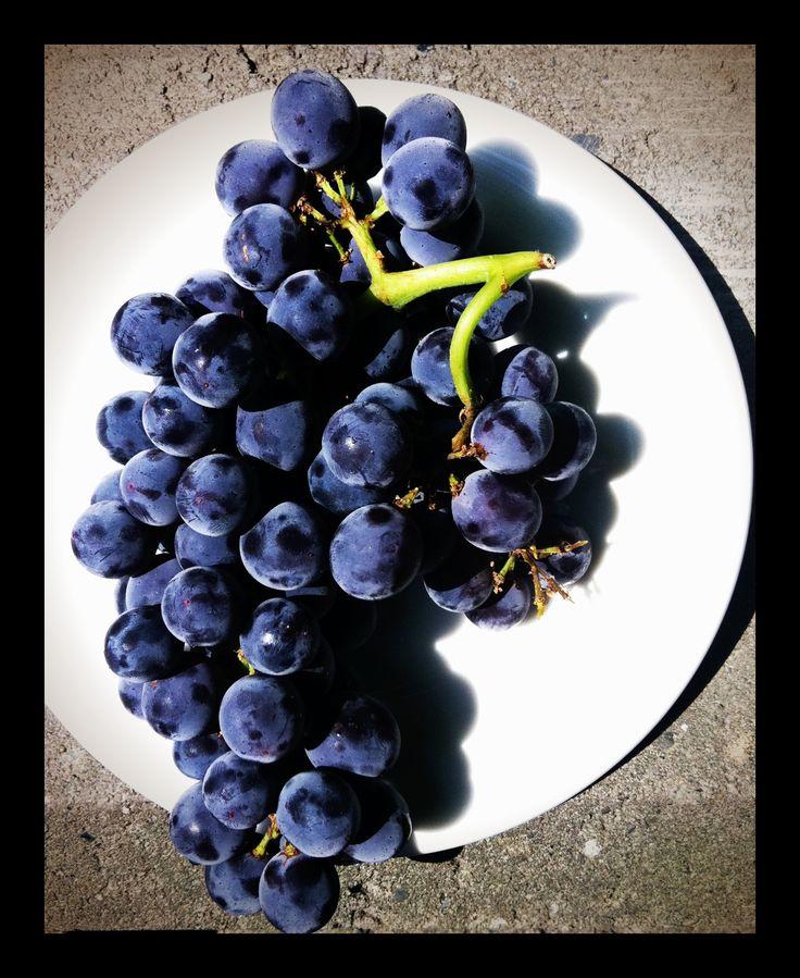 Raisins bleus - blue grapes