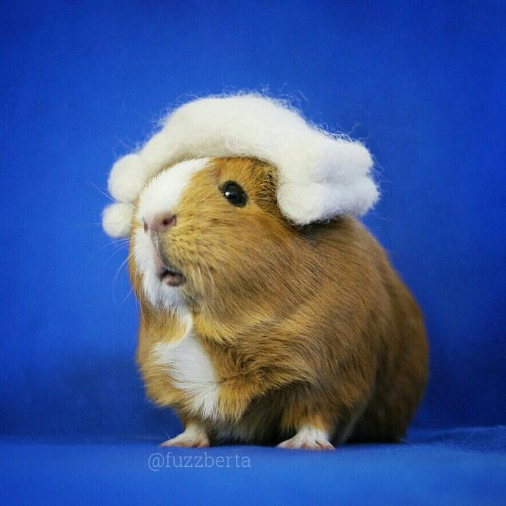 cute-hamster-costumes-fuzzberta-instagram-5