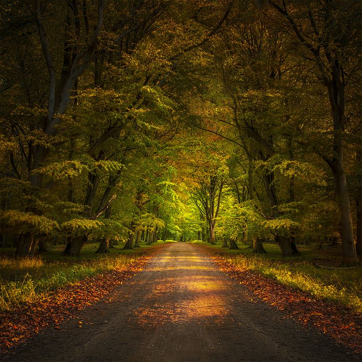 Autumn by Thorbjørn  Fessel on 500px