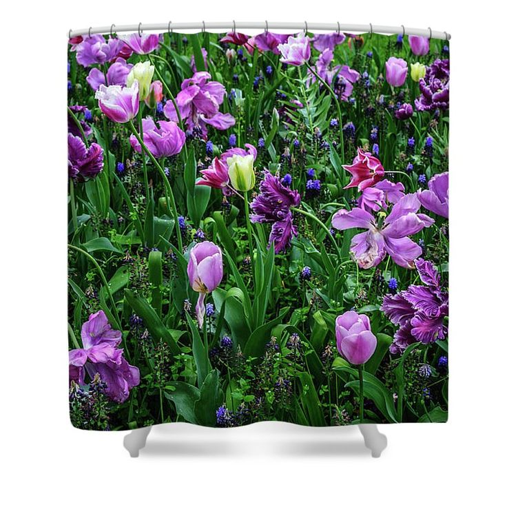 Jenny Rainbow Fine Art Photography Shower Curtain featuring the photograph Carpet Of Purple Tulips In Keukenhof by Jenny Rainbow