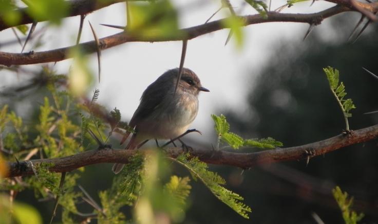 Bonamanzi bird life, KZN, SA