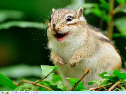 Smiling chipmunk = CUTE | Squirrels | Pinterest