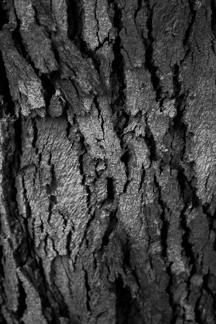 WEEK 2 - Aaron Siskind inspired, abstract, black and white
