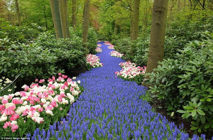 Lisse is a town in Netherlands which hosts an 80 acre garden exhibition of colorful tulips and other hybrids. It is described as one of the most beautiful gardens in the world. via dailymail.co.uk