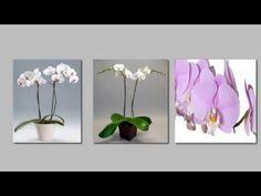Come curare l'Orchidea? Ecco i 5 passi per averla sana e vigorosa per tutto l'anno - YouTube