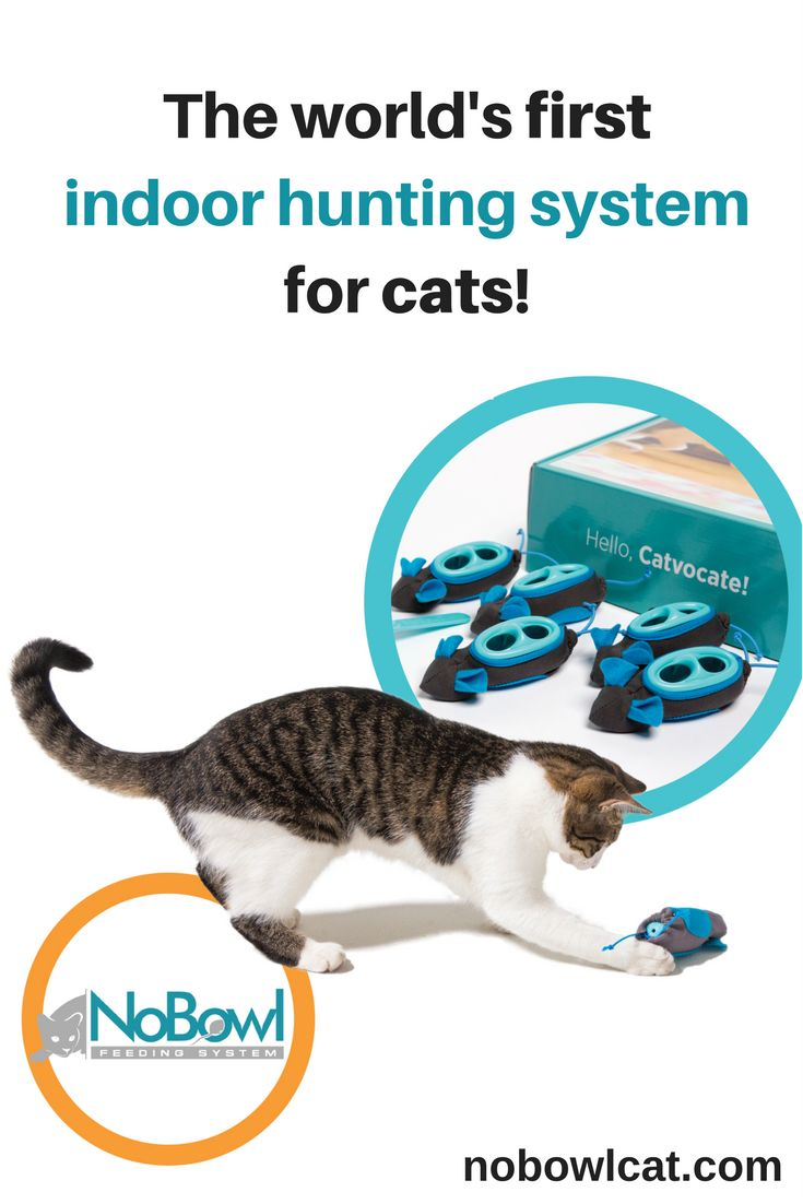 No more food bowls! No more automatic feeders! The science behind The NoBowl Feeding System inspires change to your normal cat feeding habits. NoBowl enables cats to fulfill their natural hunting instinct during mealtime, turning cats into what they always wanted to be: happy, healthy hunters.