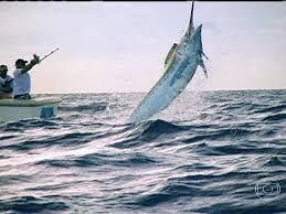Resultado de imagem para pesca em alto mar peixe grande