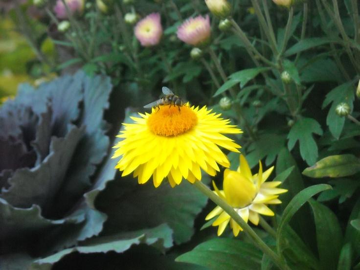 Cute bee....