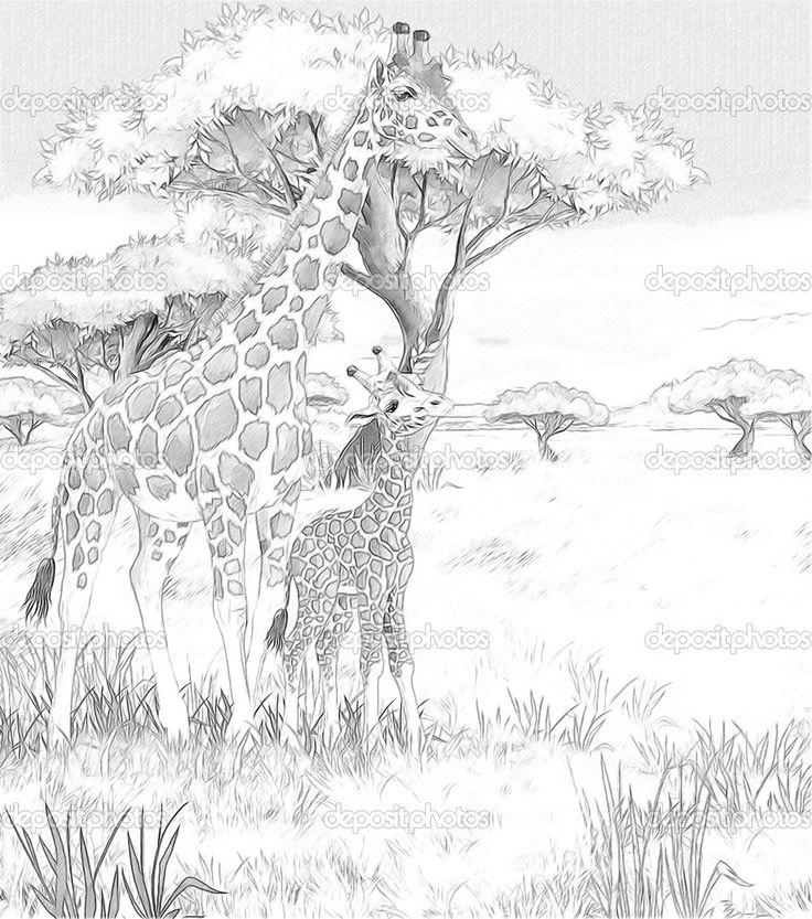 сафари - жирафы - раскраски страница - иллюстрации для детей - Стоковое изображение: 33375393