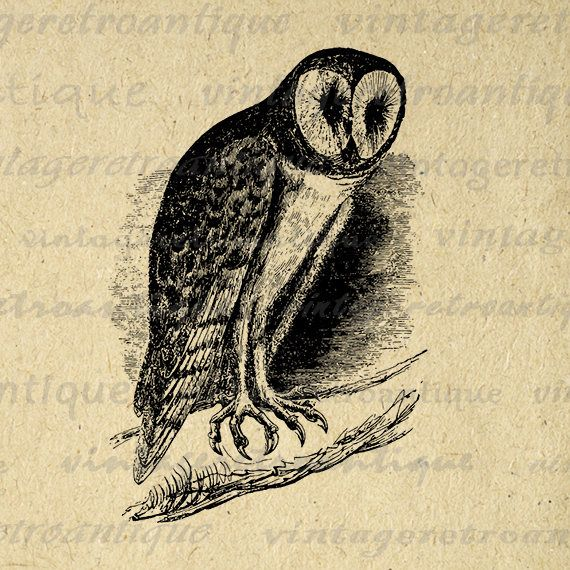 Digital Image Barn Owl Graphic Bird Illustration Printable