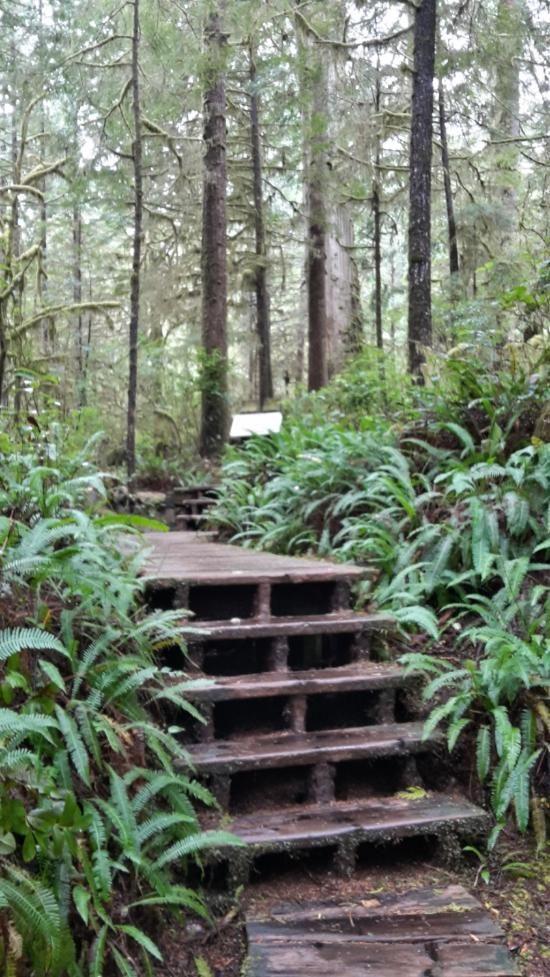 Rainforest Trail (Tofino, British Columbia): Address