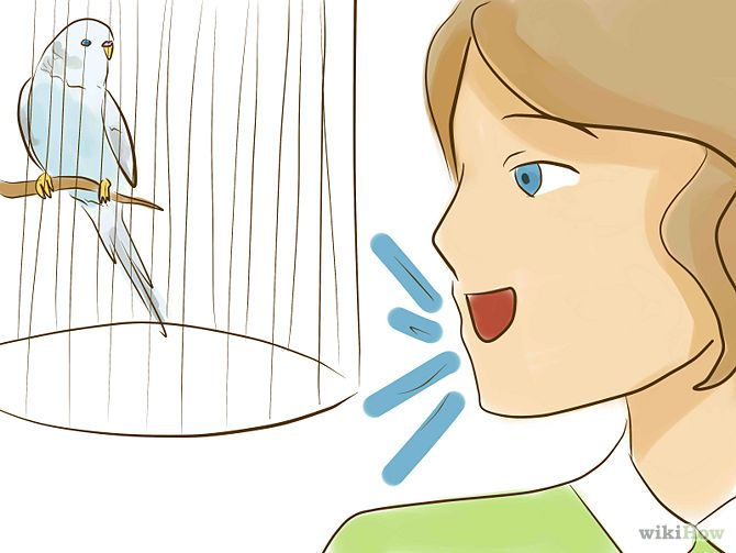 Tame Your Budgies Step 1.jpg