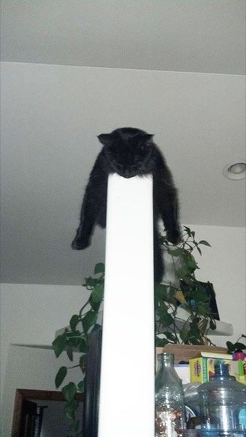Cats Who Fell Asleep In Weird Places – 27 Pictures