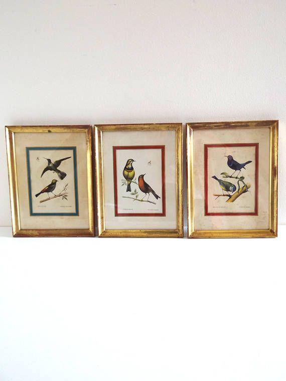 Vintage Birds Engravings Triptych in Golden Frames