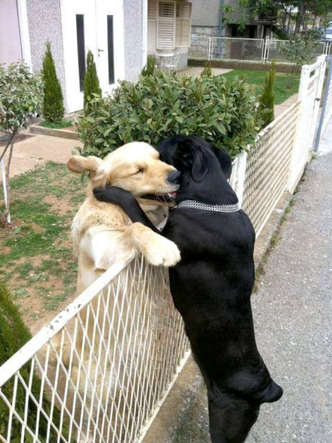 This is how I'm gonna hug you!!!! I'm sorry I haven't been on. It's been a busy couple days with a new place to stay, no wifi, and a hangover day. : /  I love you so much baby and hope you are having fun! Xoxoxo
