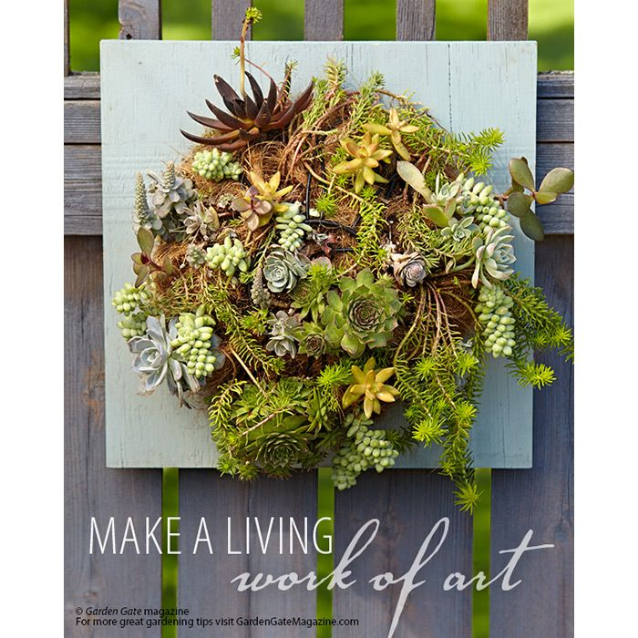 Make a living work of art | Garden Gate eNotes:   A privacy fence makes sitting in your backyard a little more relaxing — you have the space all to yourself. The downside is that you may end up staring at a big, blank wall. Crank the décor up a notch by making this unique living wall planter made from a board, an inverted hanging basket and plants.  Succulents are the common-sense choice for this project. They don't need a lot of water and actually do best with the good drainage a coco…