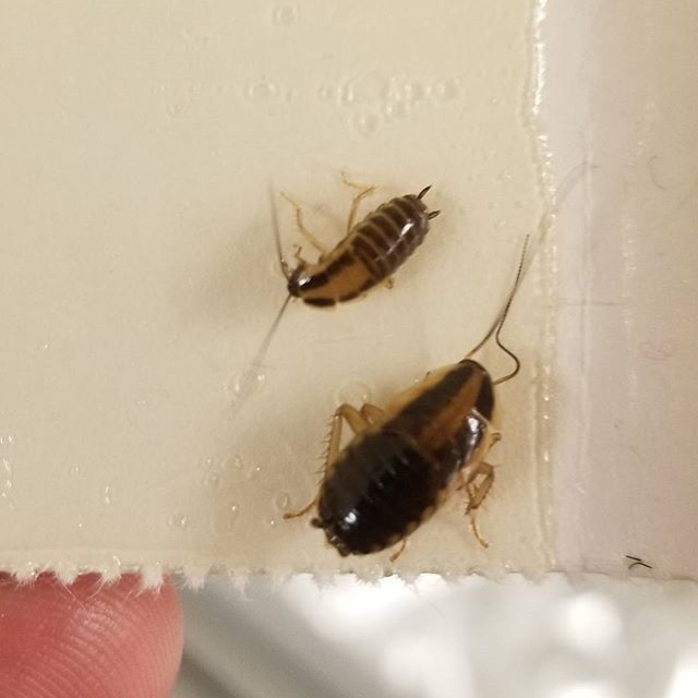 Inspect Detect and Protect. cockroach roaches