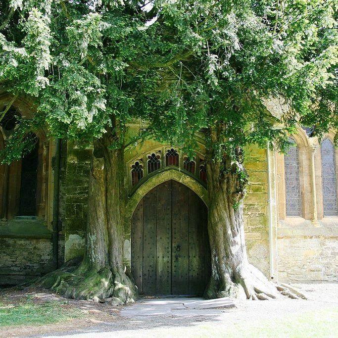 İngiltere'nin Cotswolds bölgesinde bulunan St. Edwards Kilisesi'nin kapısına çok yaşlı iki ağaç refakat ediyor. Yaklaşık 275 yaşındaki bu muhteşem kapı turistlerin de fazlaca ilgisini çekmekte  #sur #surçelikkapı #ingiltere #england #door #kapı #gate #amazing #nature