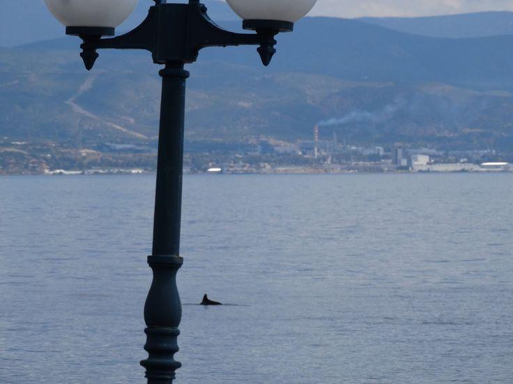 Dolphin 2014