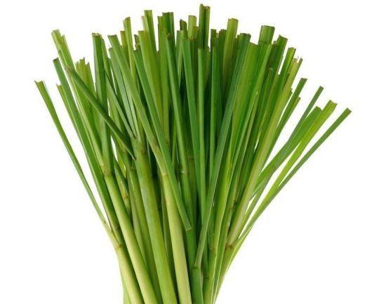 Lemongrass Oil –   Lemongrass Oil is antiseptic, antifungal, antibacterial  and energizing too!