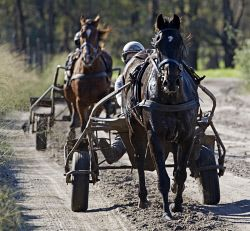 TWA-0045573 © WestPix Trainer Gary Hall's stables in Serpentine. Driver Alana Sutherland takes' Run Oneover' around the track. Picture by Gerald Moscarda  The West Australian  23 May 2016