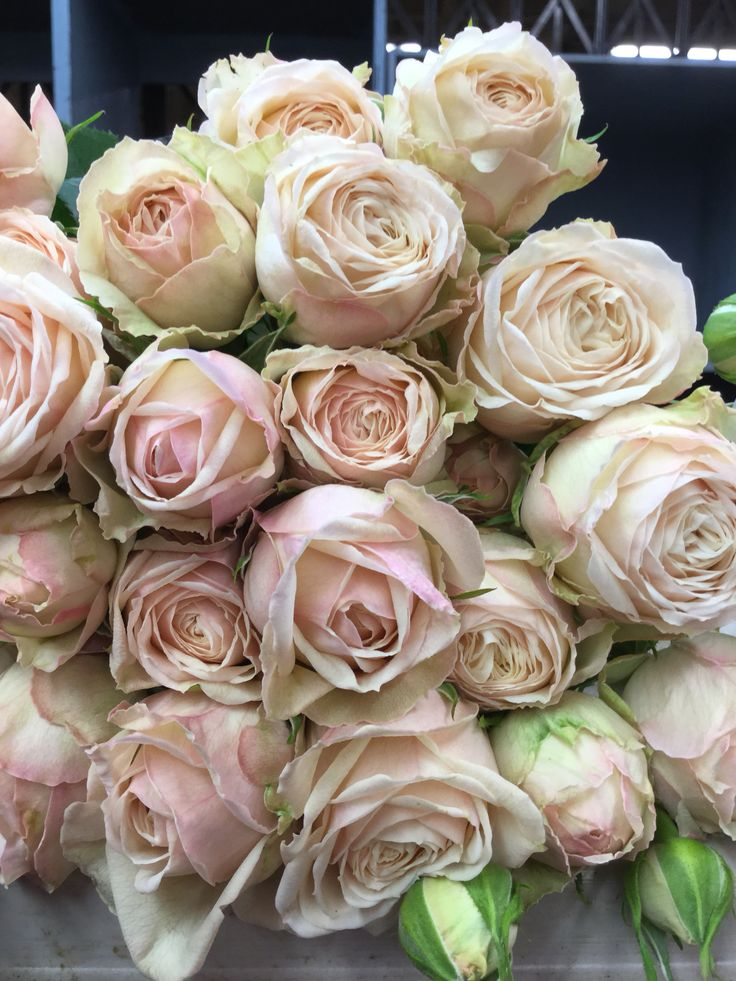 Love Garden Roses: Malaya Gem Garden Spray