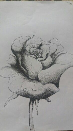 Arrgghh more roses!!! #roses #drawing
