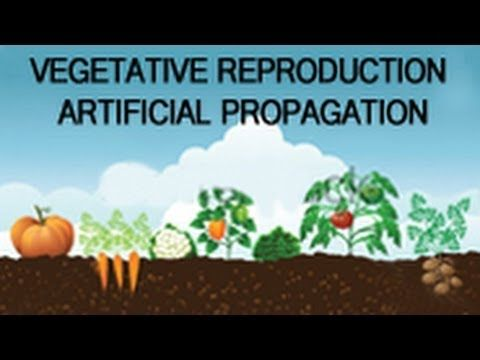 Vegetative Reproduction - Artificial Propagation