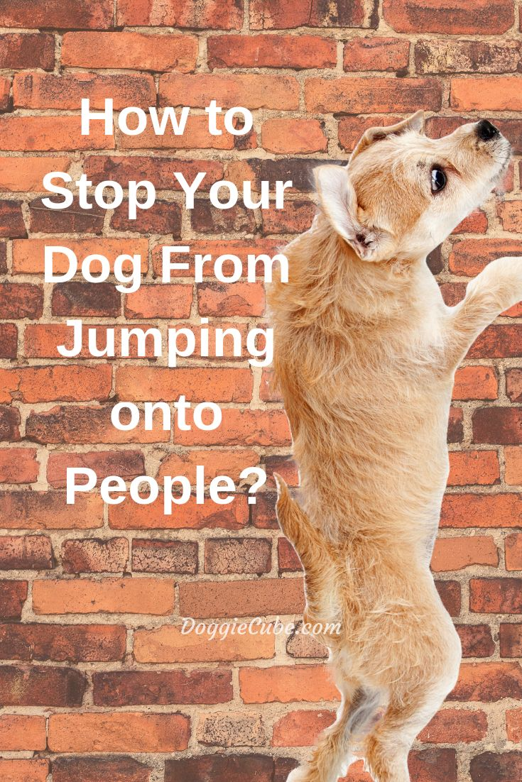 How to stop your dog from jumping onto people doggie