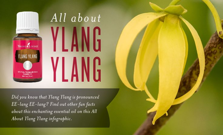 This floral favorite traveled from lush, tropical forests just to be with you! It's the perfect way to usher in warmer springtime weather after the long winter months. Get more usage tips and fun facts about Ylang Ylang essential oil in this infographic.    What's your favorite way to use Ylang Ylang? Let us know in the comments!