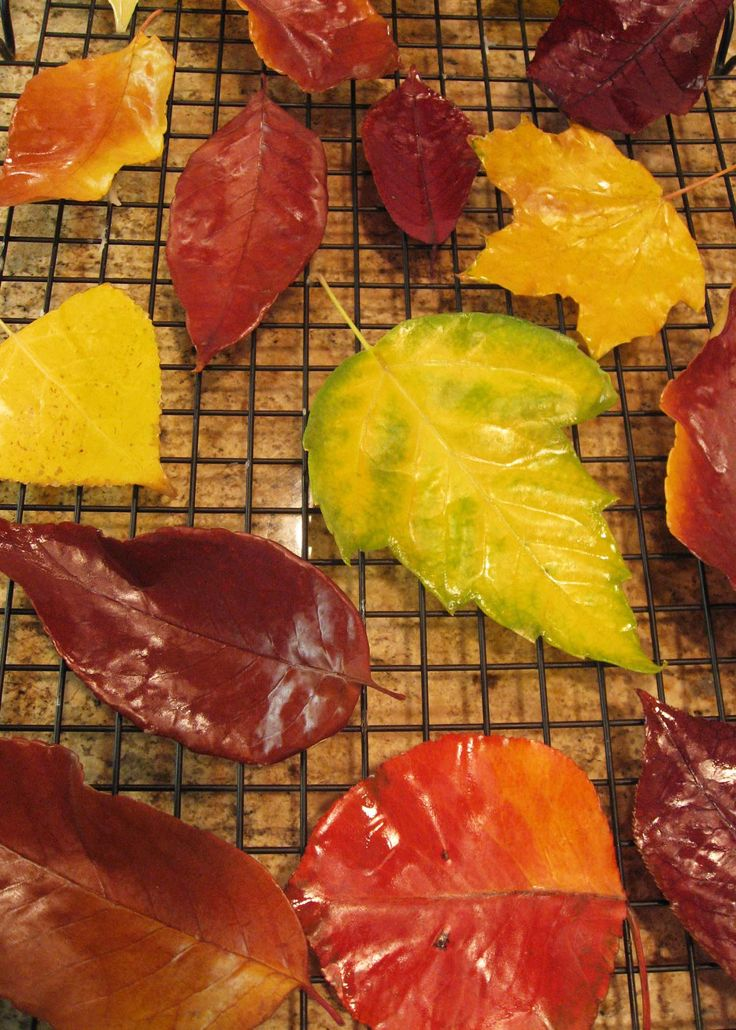 "Fall leaves preserved by dipping in wax. Pinner wrote, ""I used a scented candle wax so they smell as wonderful as they are beautiful."""