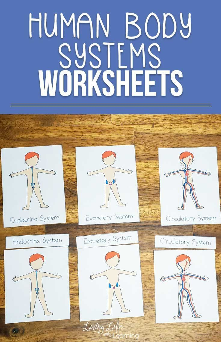 Human Body Systems Worksheets For Kids Body Systems Worksheets Human Body Systems Human Body Activities