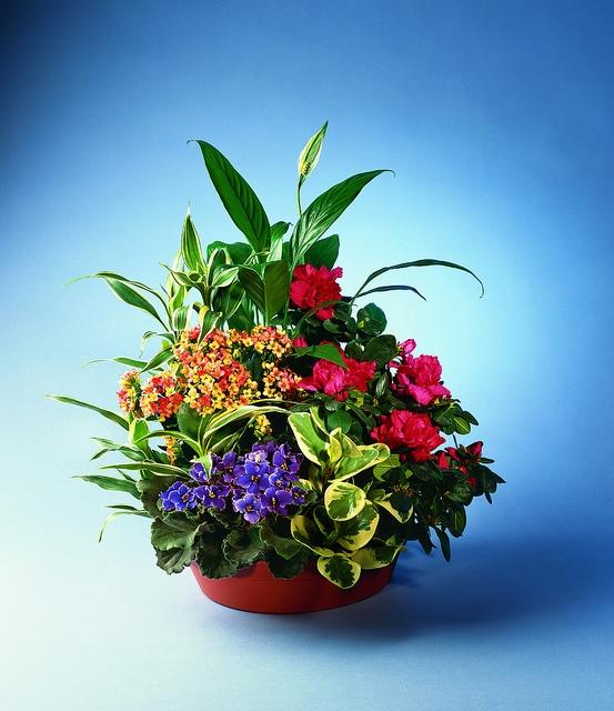 41 best dish gardens images on pinterest baskets floral for Garden plant information