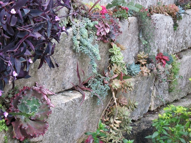 Rock Wall Planted With Succulents