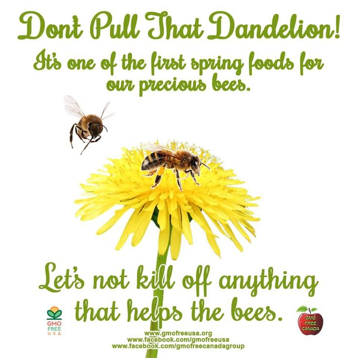 Help the Bees, Don't pull that Dandelion