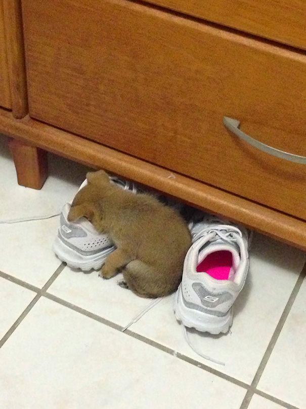 Zwierzęta śpiące w dziwnych miejscach i pozycjach