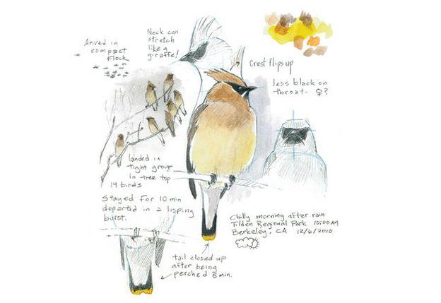 How To Draw a Bird | Audubon Magazine