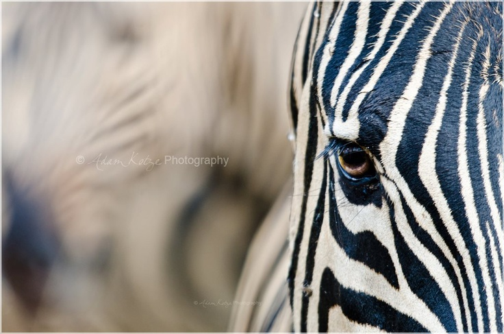 Samantha & Adam Kotze Wildlife Photography