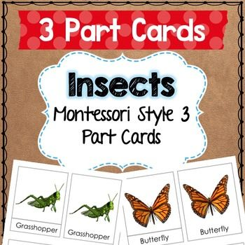 3 part cards for Montessori children to learn the names of Insects Included are: Mosquito, Praying Mantis, Grasshopper, Ladybug, Butterfly, Ant, Bee.