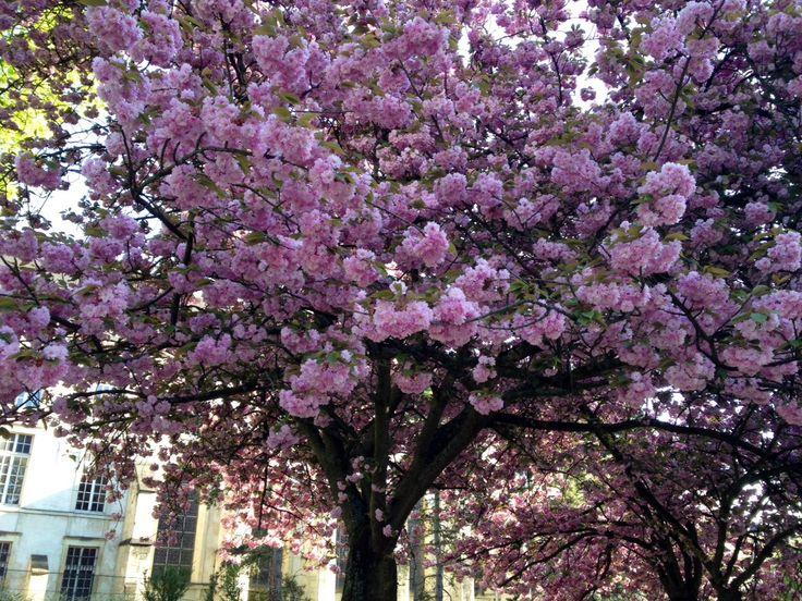 """""""Se joka istuttaa puun, vaikka tietää, ettei koskaan näe sen kukkivan, ei ole hölmö ei itsekäs. Hän saa nautintonsa siitä, että joku muu tulee joskus iloitsemaan ja nauttimaan sen kukinnasta. Hän elää sananmukaisesti kahdessa ajassa: hänelle kesä ei lopu edes syksyllä."""" (Tommy Tabermann)"""