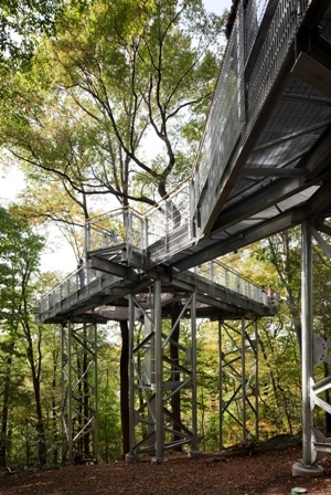 1000 Ideas About Tree Canopy On Pinterest Bright Green